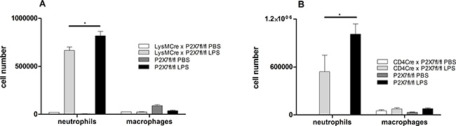 BALF cell counts in conditional CD4-Cre × P2X7fl/fl and LysM-Cre × P2X7fl/fl animals.