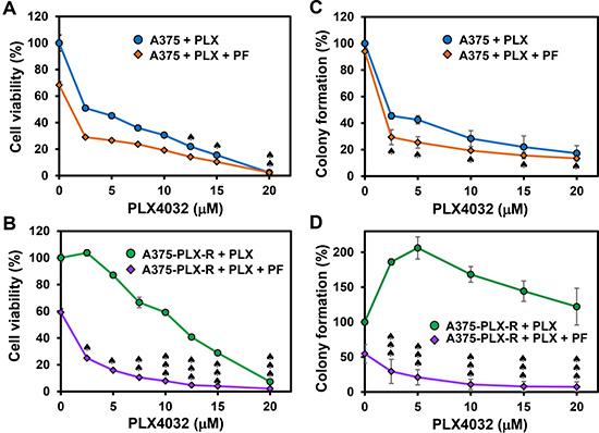 Chk1 inhibitor PF477736 re-sensitizes PLX4032-resistant melanoma cells to PLX4032.