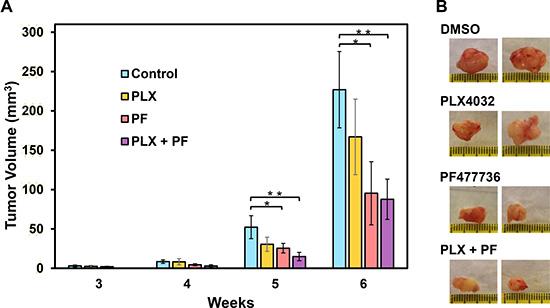 Chk1 inhibitor PF477736 reduces melanoma tumor growth.