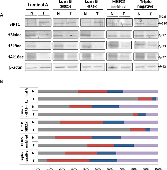 Differential expression patterns of SIRT1, H3k4ac, H3k9ac and H4k16ac in the 5 molecular breast tumor subtypes compared to matched normal tissues.