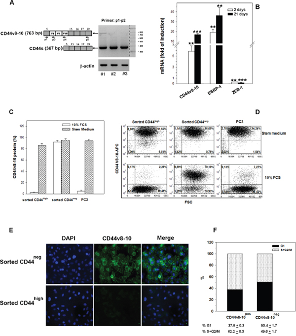 CD44v8-10 expression in CD44neg- and CD44high -derived PC3 populations.
