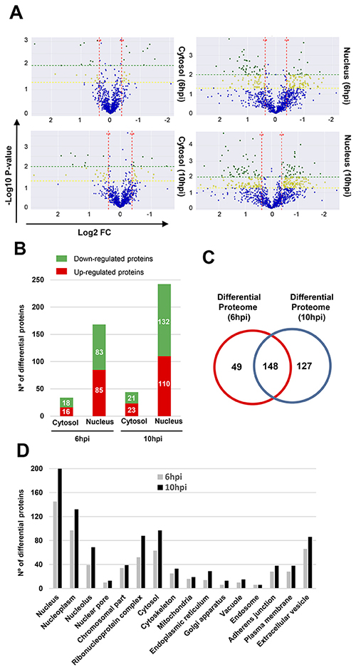 Differentially expressed proteins throughout early phases of Delta-24-RGD Infection.