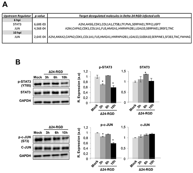 Activation profiling of STAT3 and c-JUN during Delta 24-RGD infection.
