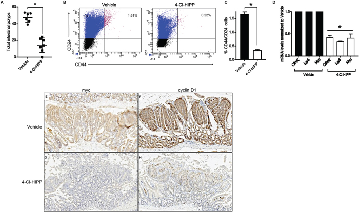 Pharmacological inhibition of Ctbp2 decreases polyposis and TIC populations in Apc min/+ intestinal epithelia.
