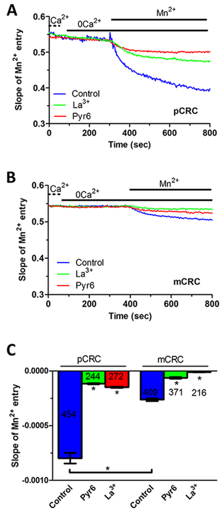 Constitutive Ca2+ entry in patients-derived colorectal cancer cells.