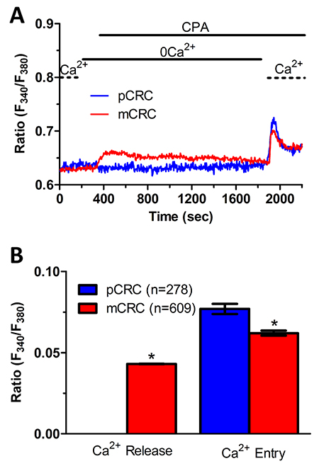 ER-dependent Ca2+ release is significantly reduced in primary colorectal cancer cells.