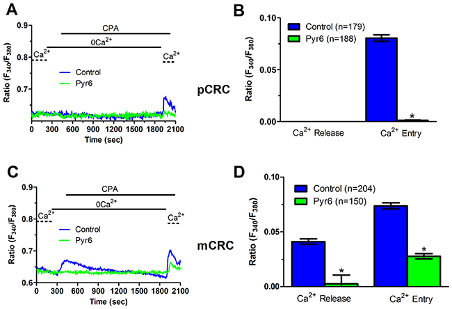 Pyr6 inhibits ER-dependent Ca2+ release in patients-derived colorectal cancer cells.