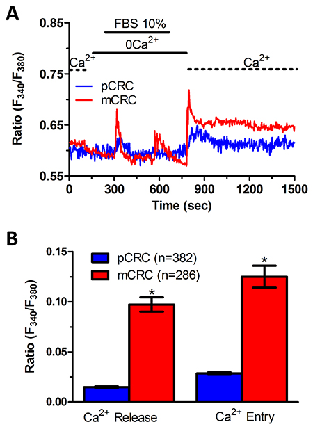 InsP3-dependent Ca2+ release is lower in primary colorectal cancer cells.
