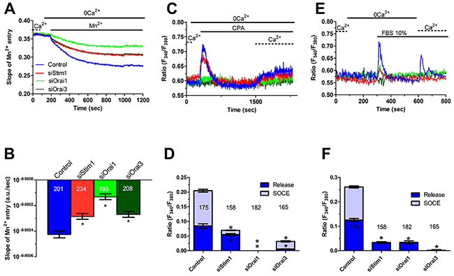 Genetic silencing of Stim1, Orai1 and Orai3 reduces constitutive Ca2+ entry and reduces ER Ca2+ refilling in metastatic colorectal cancer cells.