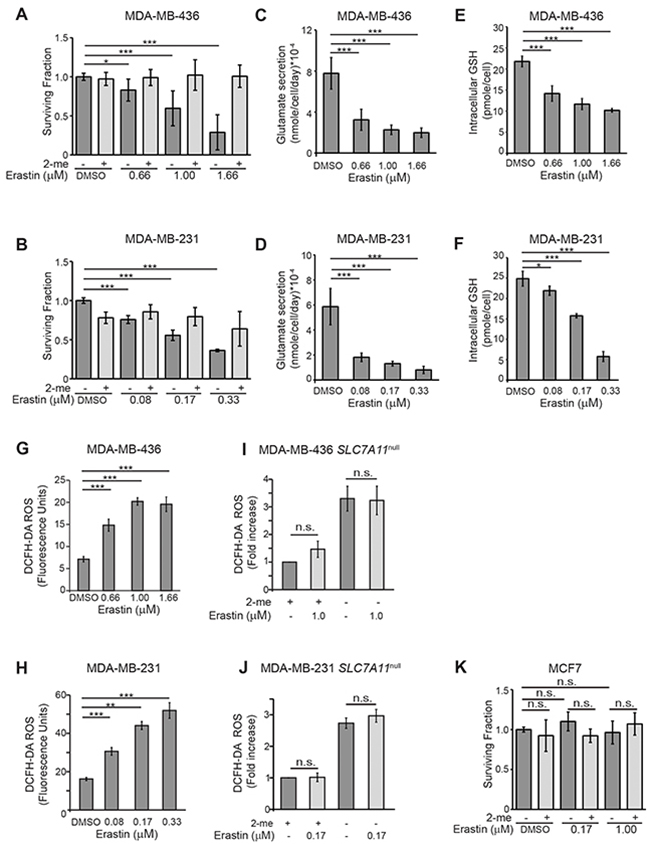 Erastin inhibits xCT activity in xCT+ breast cancer cell lines.