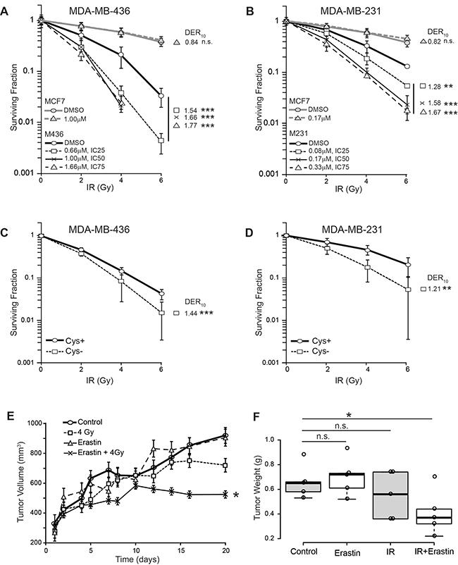 Erastin sensitizes xCT+ cells to ionizing radiation (IR) in vitro and in xenograft.