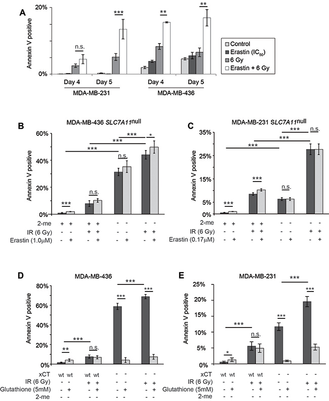 Erastin sensitization and SLC7A11-targeted mutation increase radiation-induced cell death in a glutathione-sensitive fashion.