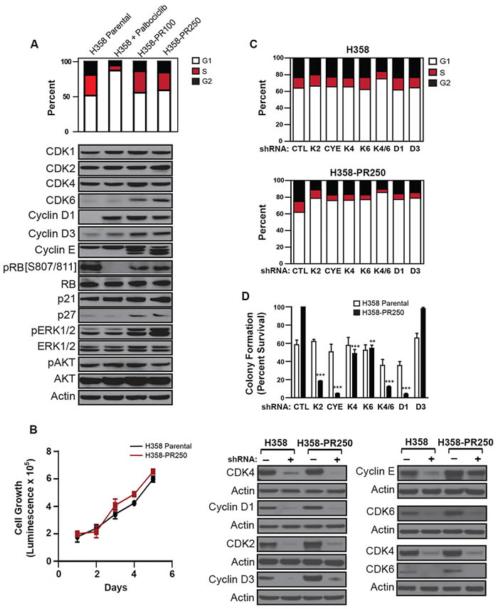 Up-regulation of G1 cyclins and CDKs mediates palbociclib resistance in NSCLC cells.