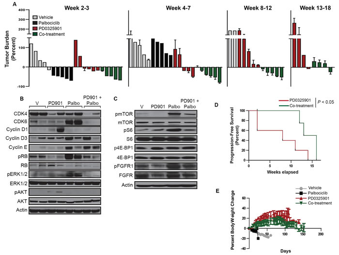 The palbociclib-PD0325901 combination reduces tumor burden and improves progression-free survival in a genetically-engineered mouse model of