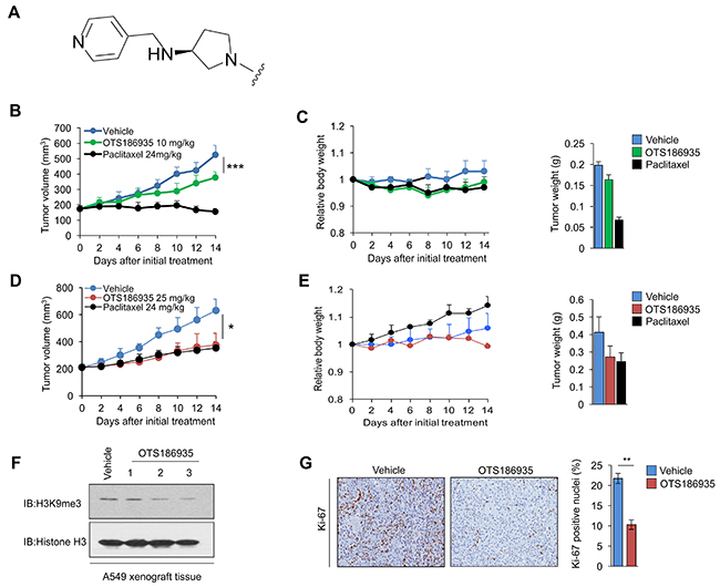In vivo efficacy of OTS186935 in MDA-MB-231 and A549 xenograft mouse models.