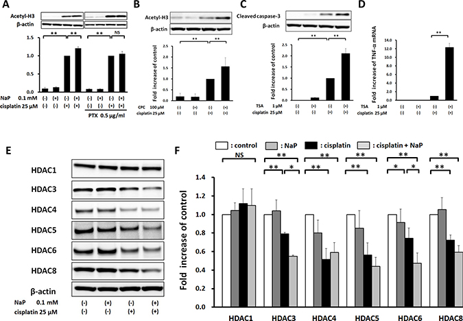 Elevation of cisplatin-induced acetylation of histone H3 by NaP in a GPR41-dependent manner in HepG2 cells.