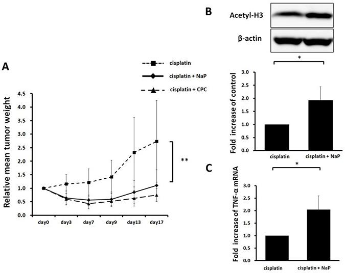 Therapeutic efficacy of NaP + cisplatin in HCC HepG2 xenografts.