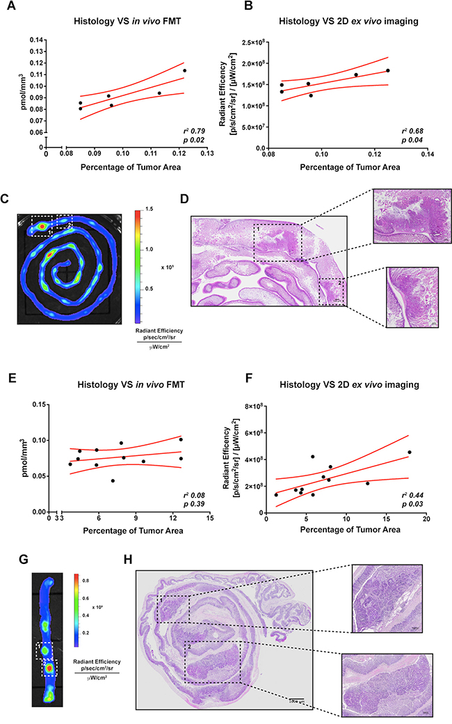 Correlation between in vivo or ex vivo imaging analysis and conventional histology of small intestine and colorectal tumor-bearing APC+/min mice.