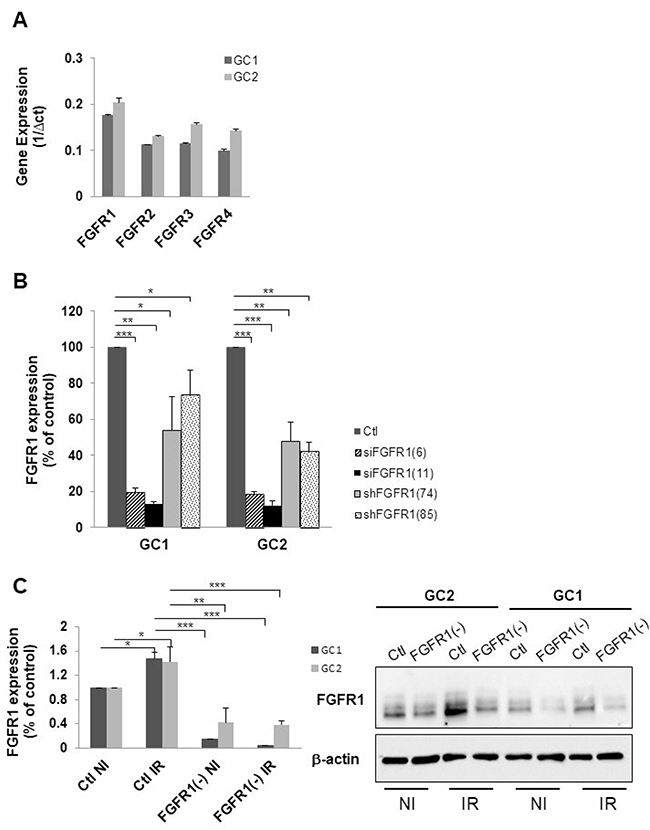 Down-regulation of FGFR1 gene expression in tumor cells derived from human GBM biopsy specimens.