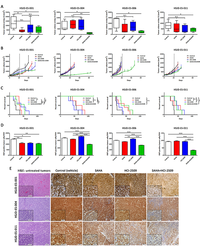 SAHA and HCI-2509 combination impaired tumor growth in ES PDX mice models.
