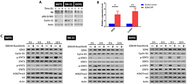 LEE011 and ruxolitinib inhibit growth by blocking cell cycle progression and STAT signalling respectively.