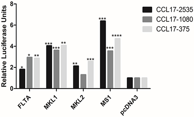 Effect of full-length and truncated (MKL-1, MKL-2 and MS-1) LT on CCL17/TARC promoter activity in MCC13 cells.