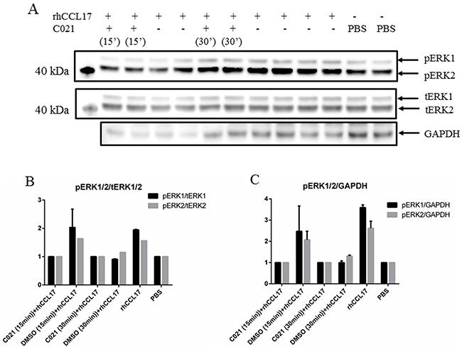 The CCR4 receptor antagonist C021 reduces CCL17/TARC-induced phosphorylation of ERK1/2.