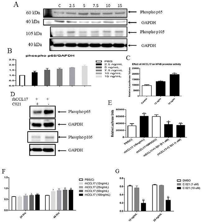 CCL17/TARC upregulated NFκB activity.