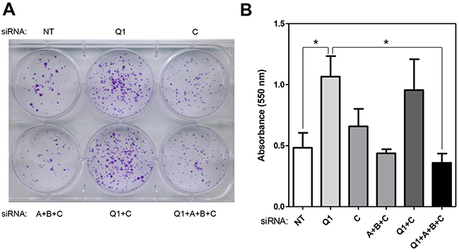Regulation of cell proliferation by HERC1 is RAF dependent.