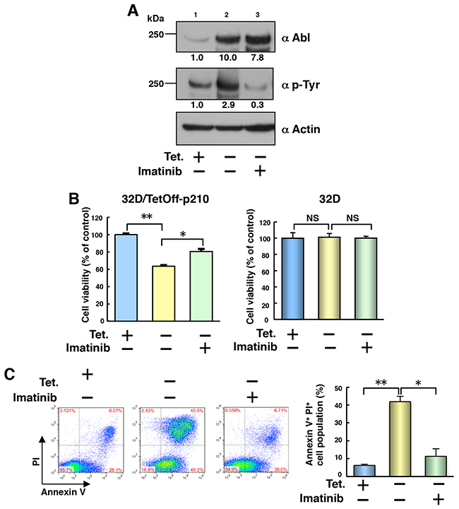 Tet-regulatable overexpression of p210BCR-ABL induces cell death in 32D/TetOff-p210 cells.