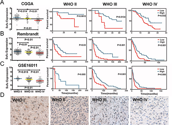 The expression difference and prognostic value of Sufu in glioma tissues.