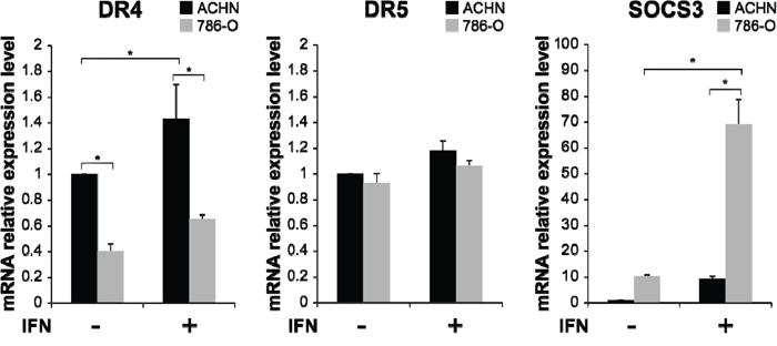 Interferon (IFN)-α-induced mRNA expression of TRAIL-R1/DR4, TRAIL-R2/DR5 and suppressor of cytokine signaling 3 (SOCS3) in RCC cells.