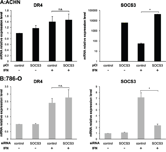 Effect of pCI-SOCS3 vector or SOCS3 siRNA transfection on DR4 mRNA expression.