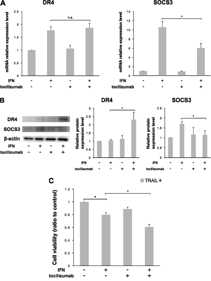 Combination of IFN-α and tocilizumab lead the inhibition of cell viability in response to TRAIL Antihuman IL-6 receptor antibody, tocilizumab, was used for the inhibition of IL-6 signaling.