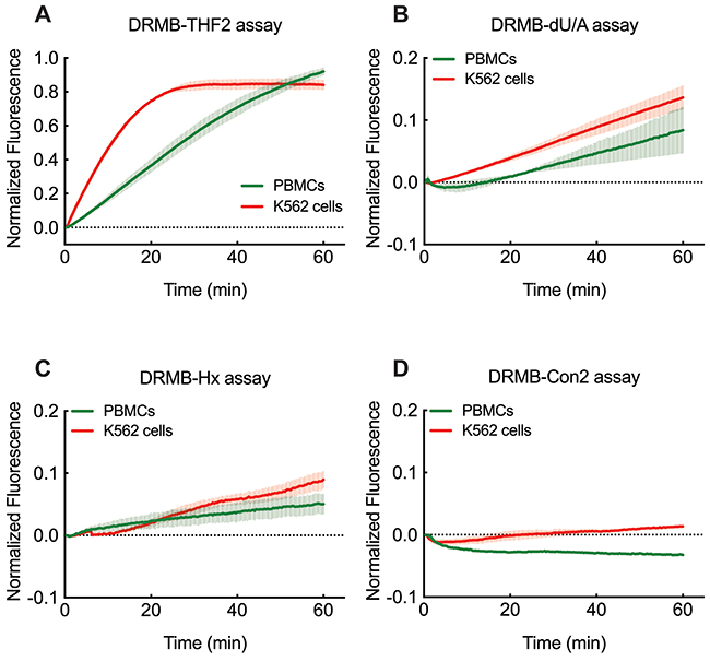 DRMB assay for the analysis of base lesion removal in K562 leukemia cells and normal human PBMCs.
