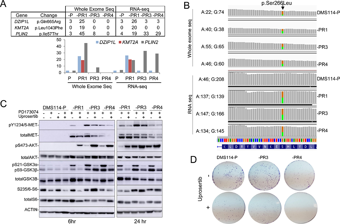 Genomic screening of DMS114-P and DMS114-R cells.