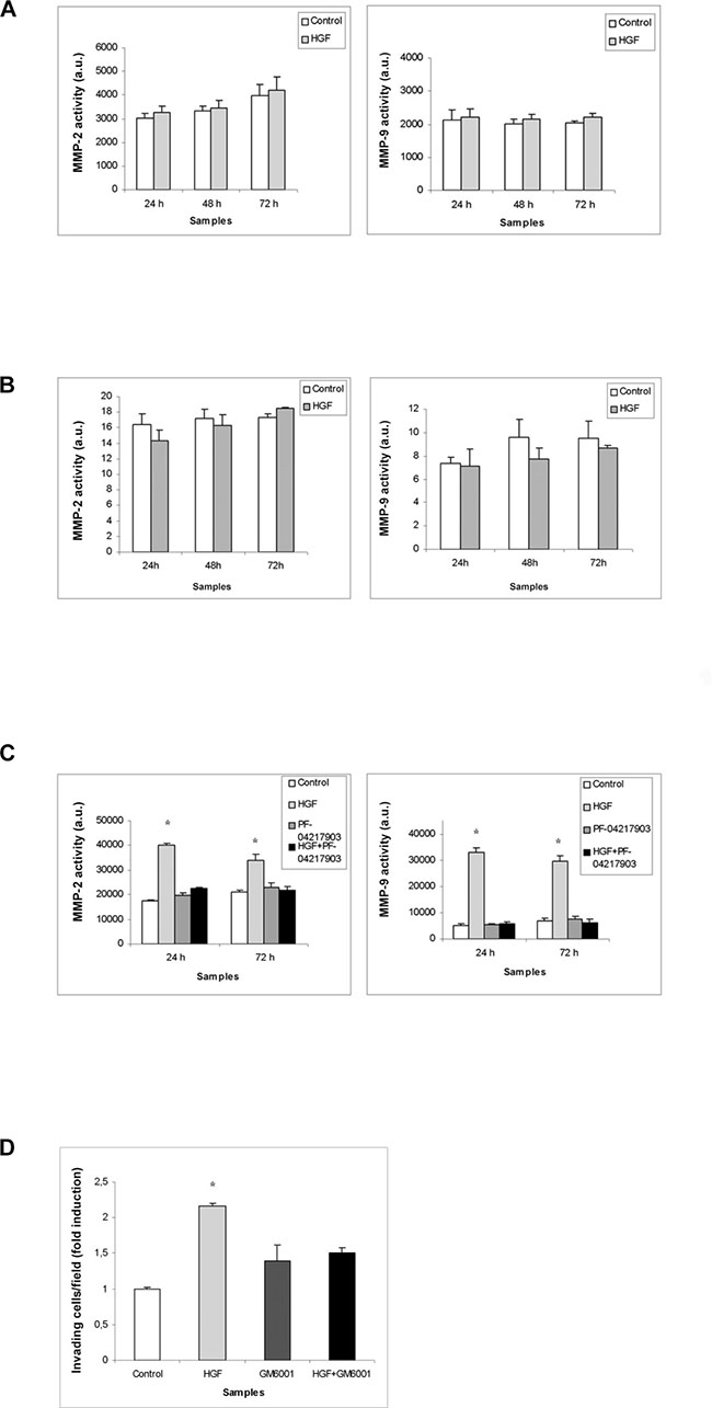 MMPs activity in (T)GCT cell line conditioned media after HGF stimulation.