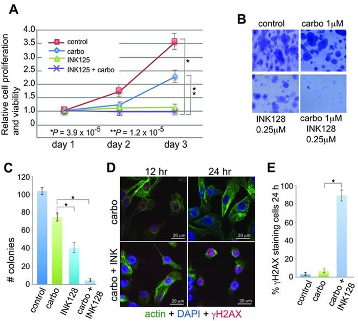 Anti-proliferative and sensitizing effects of INK128 with carboplatin in OVCAR-3 cells.