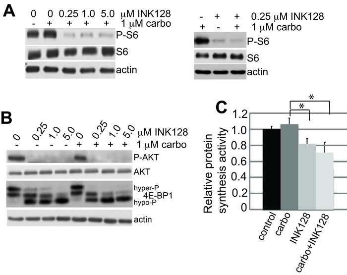mTORC1/2 inhibition by INK128 is unaffected by carboplatin treatment.