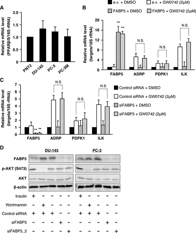PPARβ/δ signaling might not be involved in FABP5-mediated growth promotion of PCa cells.