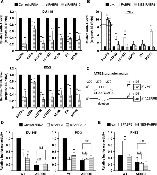 FABP5 promotes cell growth via ERRα signaling pathway in PCa cells.