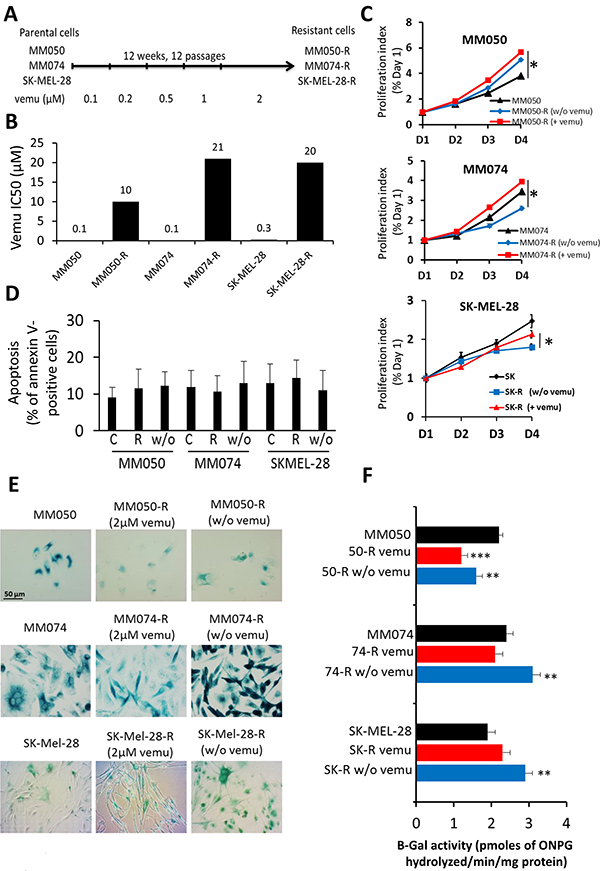 Effect of acquired resistance to BRAF inhibition by vemurafenib on cell proliferation, apoptosis and β-Gal activity.