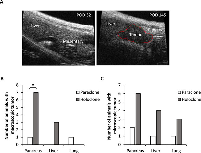 Panc1 holoclone cells exhibit an increased tumorigenic potential in vivo.