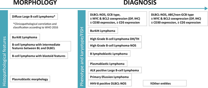 Histopathological diagnosis of DLBCL.