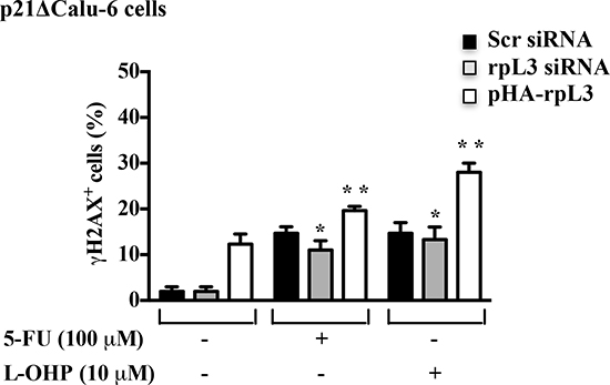 Role of p21 in the rpL3-mediated control of DNA repair.