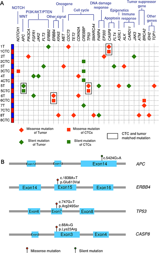 Next-generation sequencing after targeted exon enrichment.