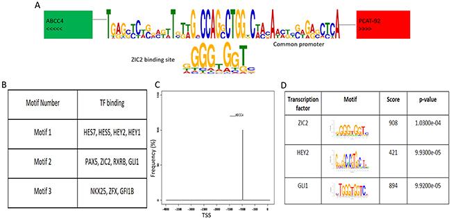 ABCC4-PCAT92 locus.