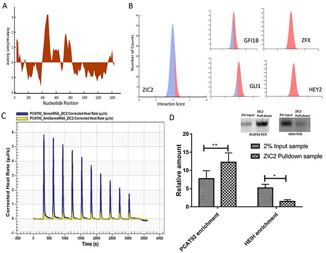 Interaction studies between PCAT92 and ZIC2.