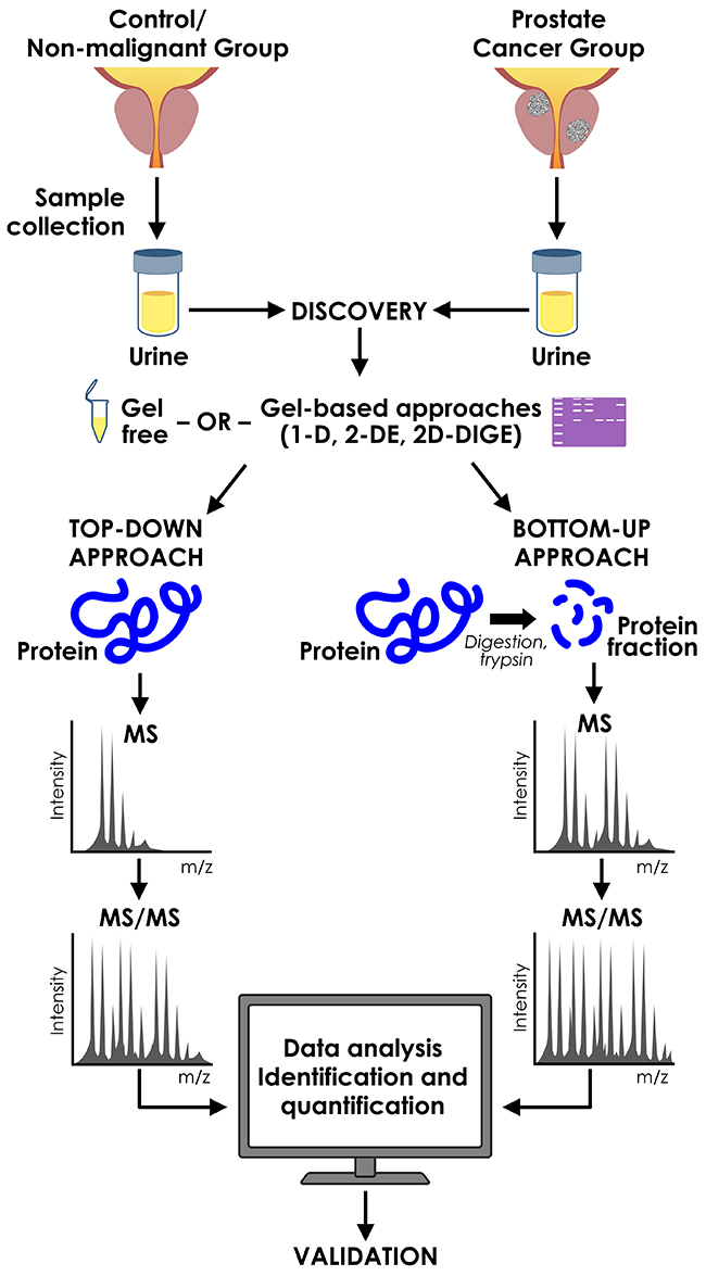 Proteomic approaches used in discovery of urinary prostate cancer biomarkers.