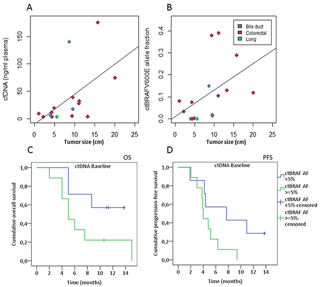 Baseline cfDNA levels correlate with tumor size and survival.